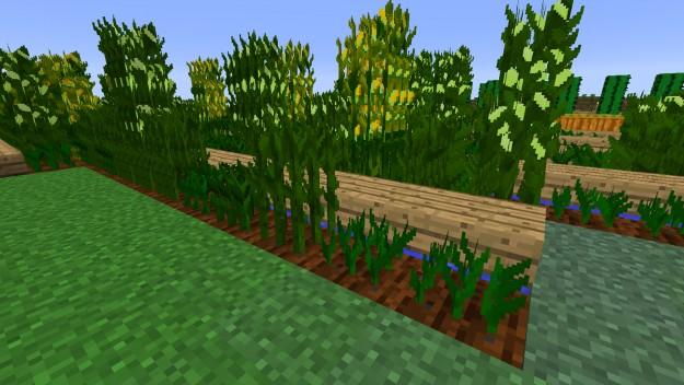 simply_corn_01