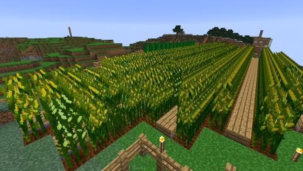 simply_corn_05